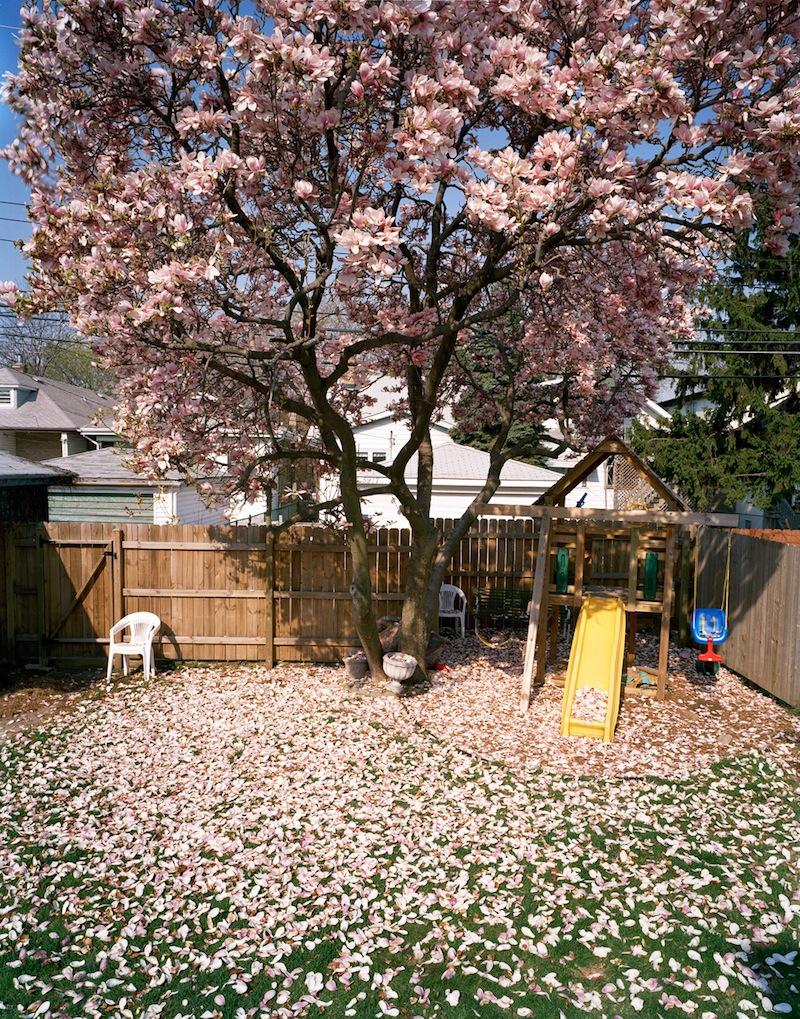 Magnolia by Colleen Plumb | Digital C-Print