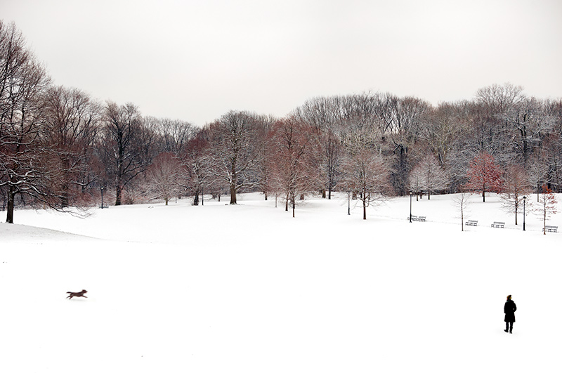 Long Meadow No. 2 by Joseph Holmes   Archival Pigment Print
