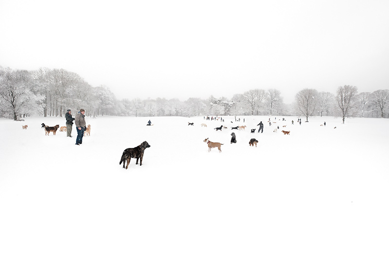 Nethermead Dog Walkers by Joseph Holmes   Archival Pigment Print