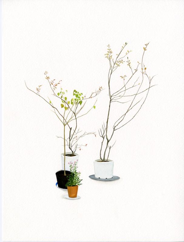 house plant 3.jpg