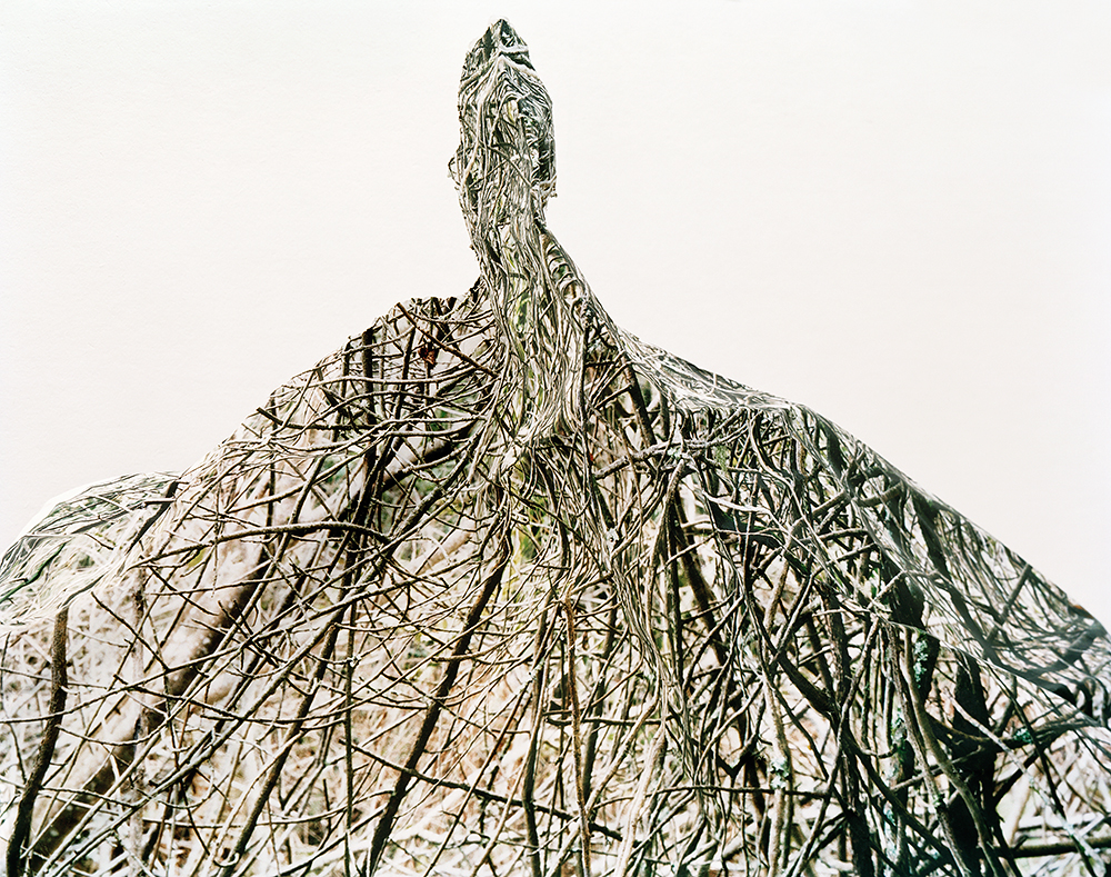 Response #1 to Print of Thicket, 2006    byLaura Plageman | Archival Pigment Print