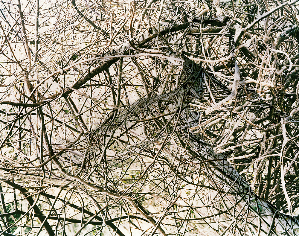Response #2 to Print of Thicket, 2006    byLaura Plageman | Archival Pigment Print