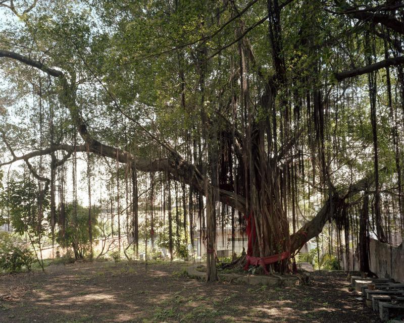 Buddha Tree at Tong's Bay byKurt Tong| Digital C-Print