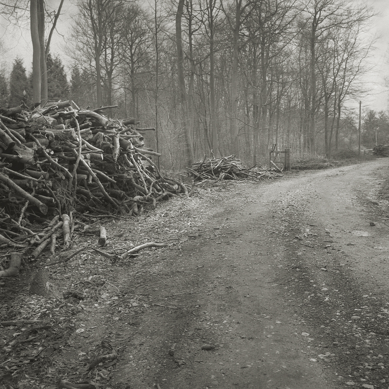Brush Piles  by Beth Dow | Platinum-Palladium Print