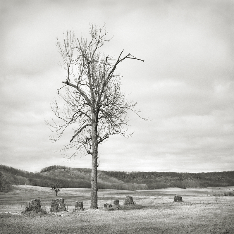 Seven Stumps  by Beth Dow | Platinum-Palladium Print