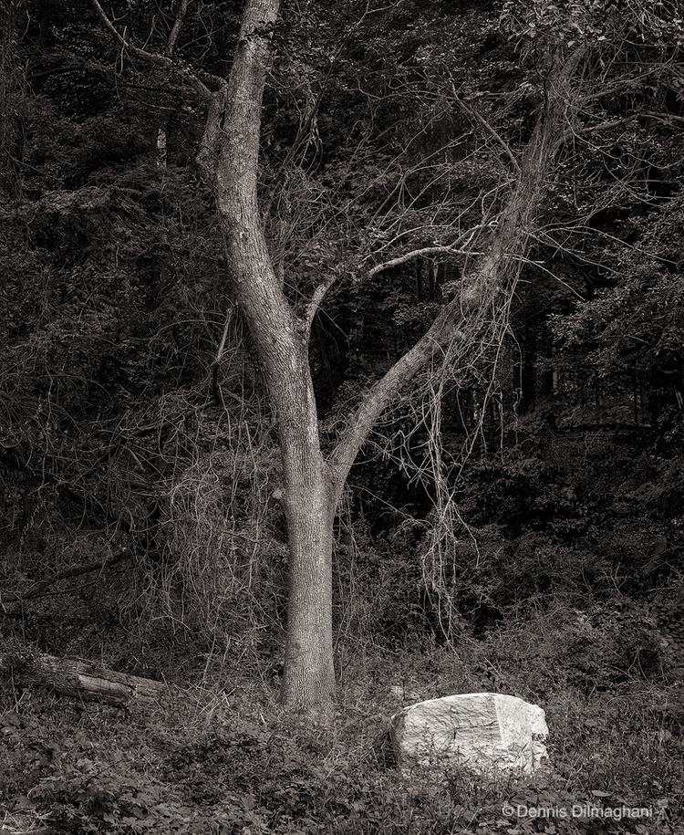 Tree & Rock, Greenwich, CT