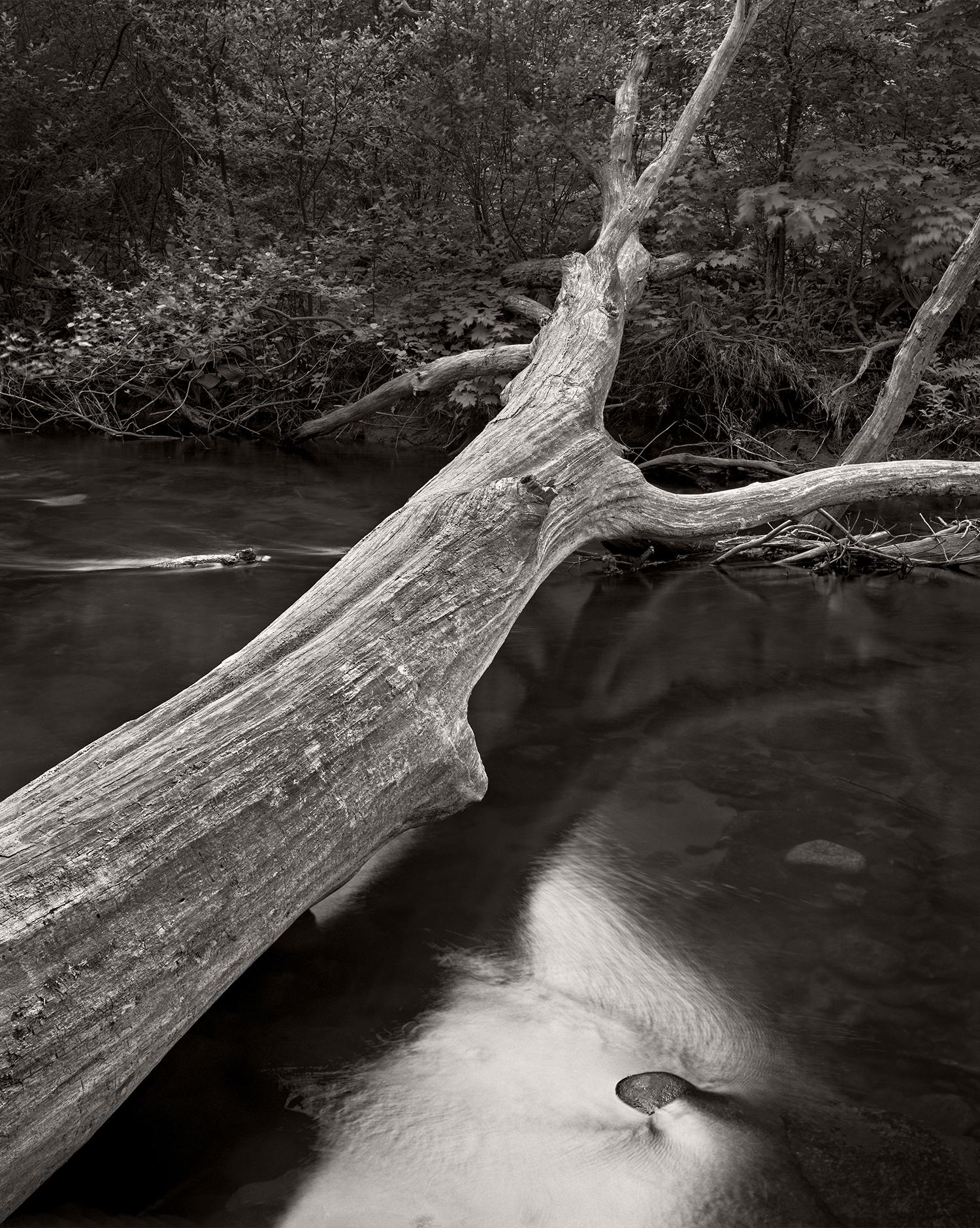 DilmaghaniD_Fallen-Tree-Over-Stream.jpg