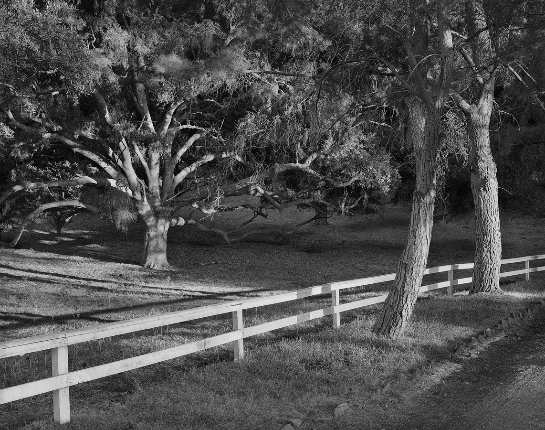 CA_HiddenValley_trees_4x5scan_121_sharp_1142x900_rv1.jpg