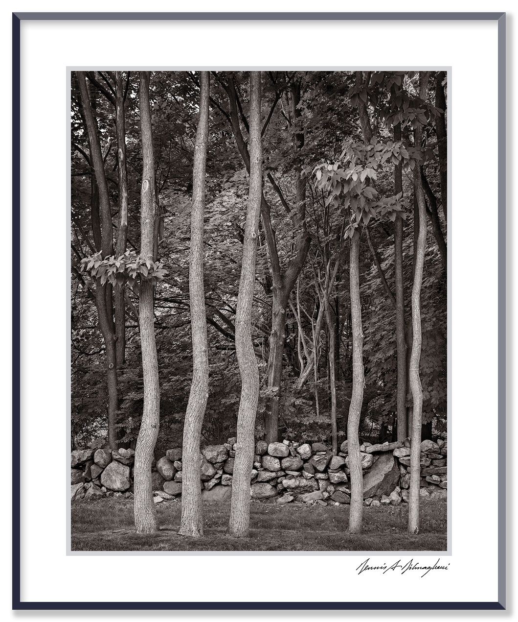 Dancing Trees - SUNY Campus, Purchase, NY