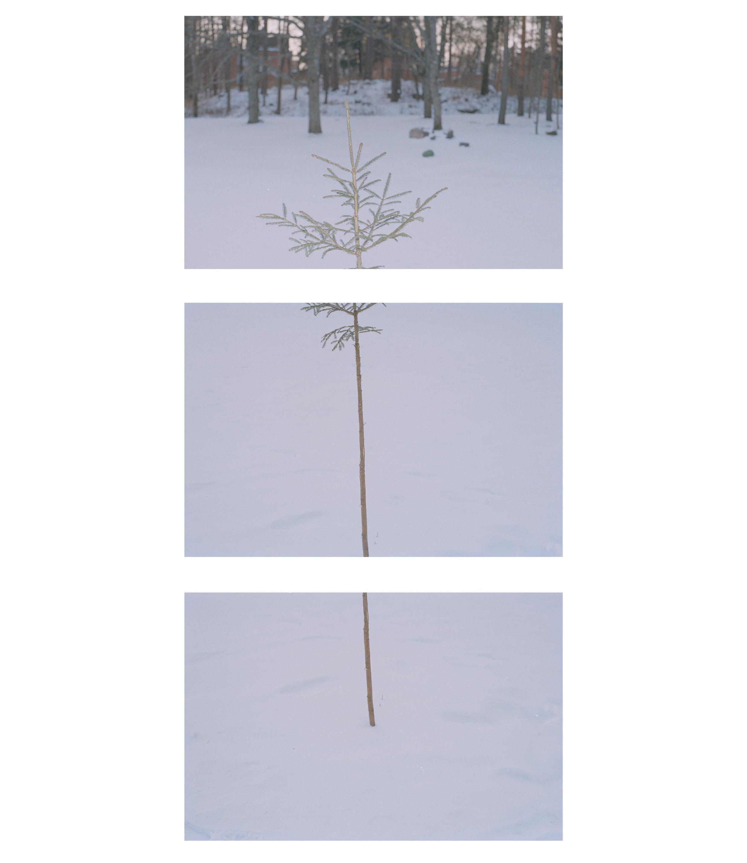 Tree_real.jpg
