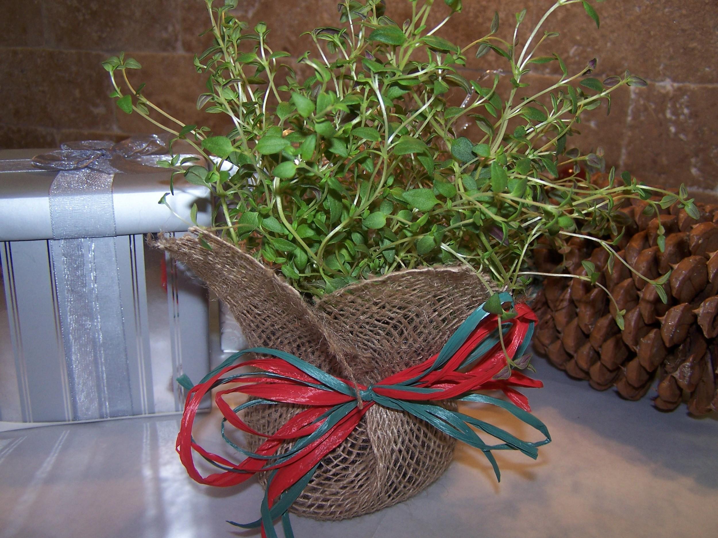 Dec. Herbs.JPG