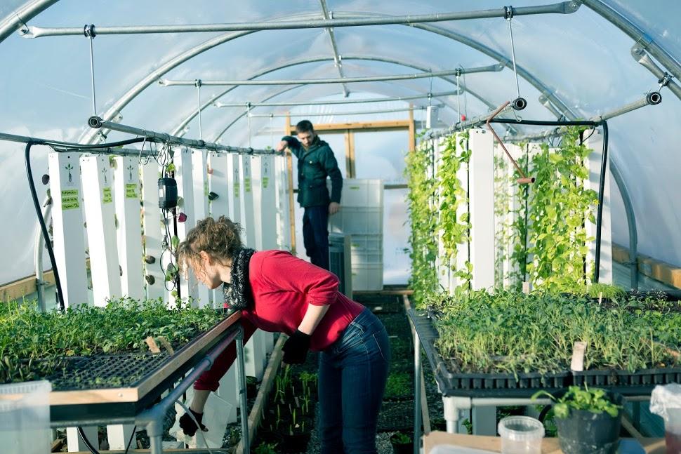 BIOARK   Drivhus på taket vil gi frisk salat hele året. Her testes dyrkningsmetoder som gir bærekraftig produksjon på komprimert plass.