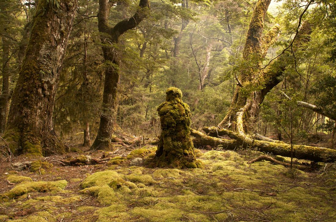 Title: Rain-Forest Guardian