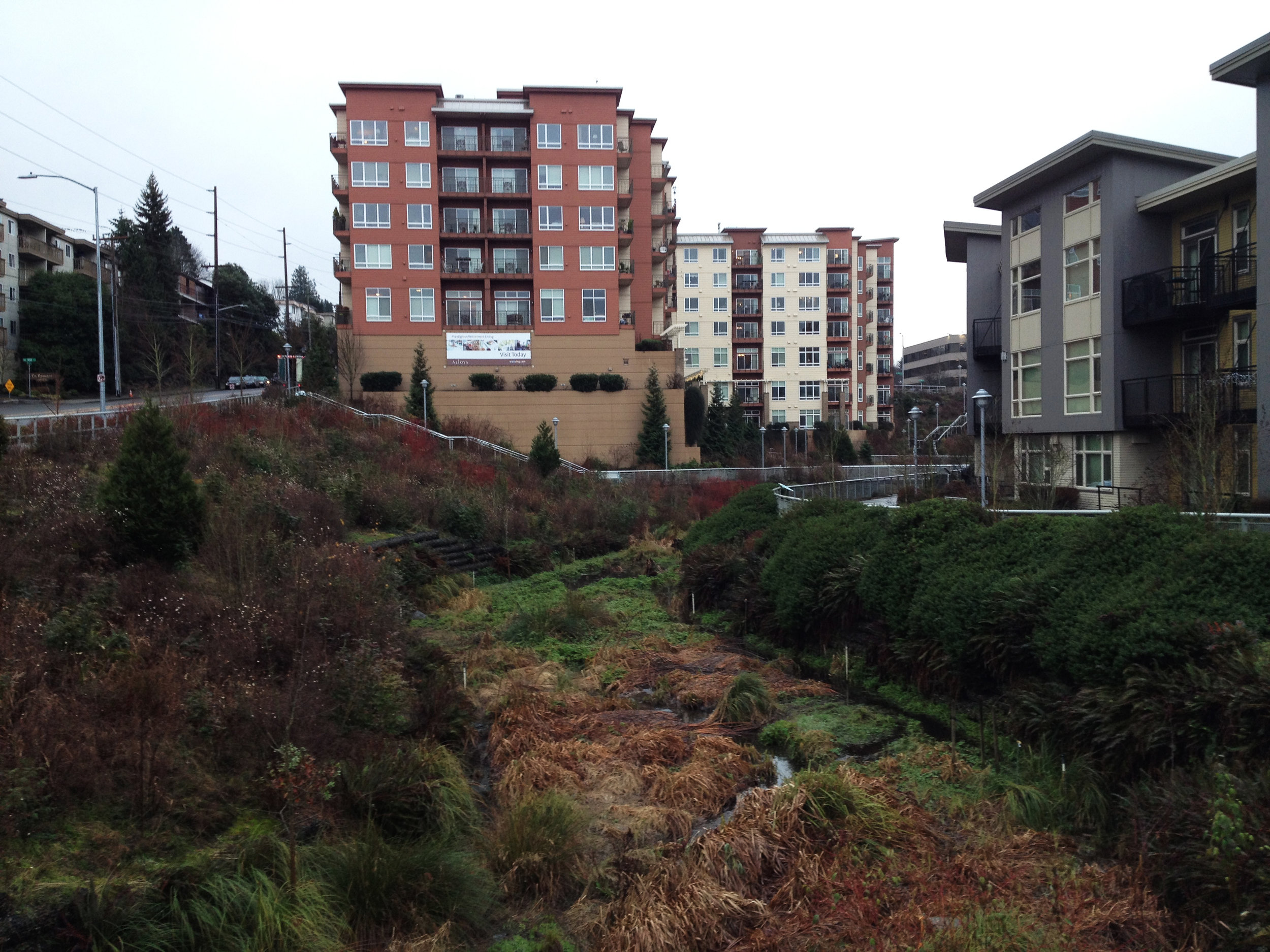 Thornton Creek, Seattle. Foto: Vaar Bothner