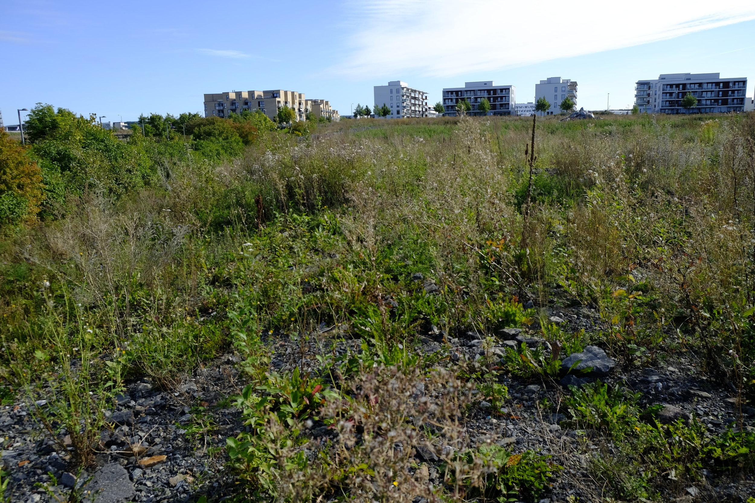 Et av områdene på Fornebu som fremdeles venter på å bli bygget ut. Foto: Kjersti B. Skjelbreid