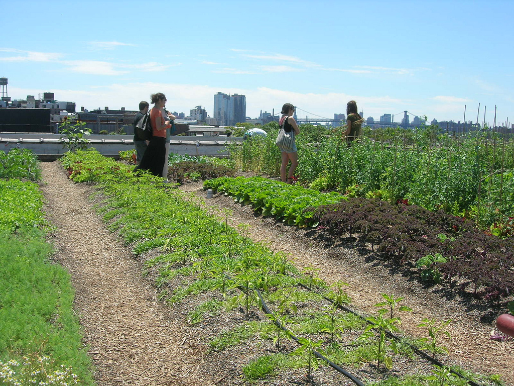 De fleste planter kan dyrkes fram på tak. Her fra Brooklyn Grange i New York. Foto: Julie, flickr.