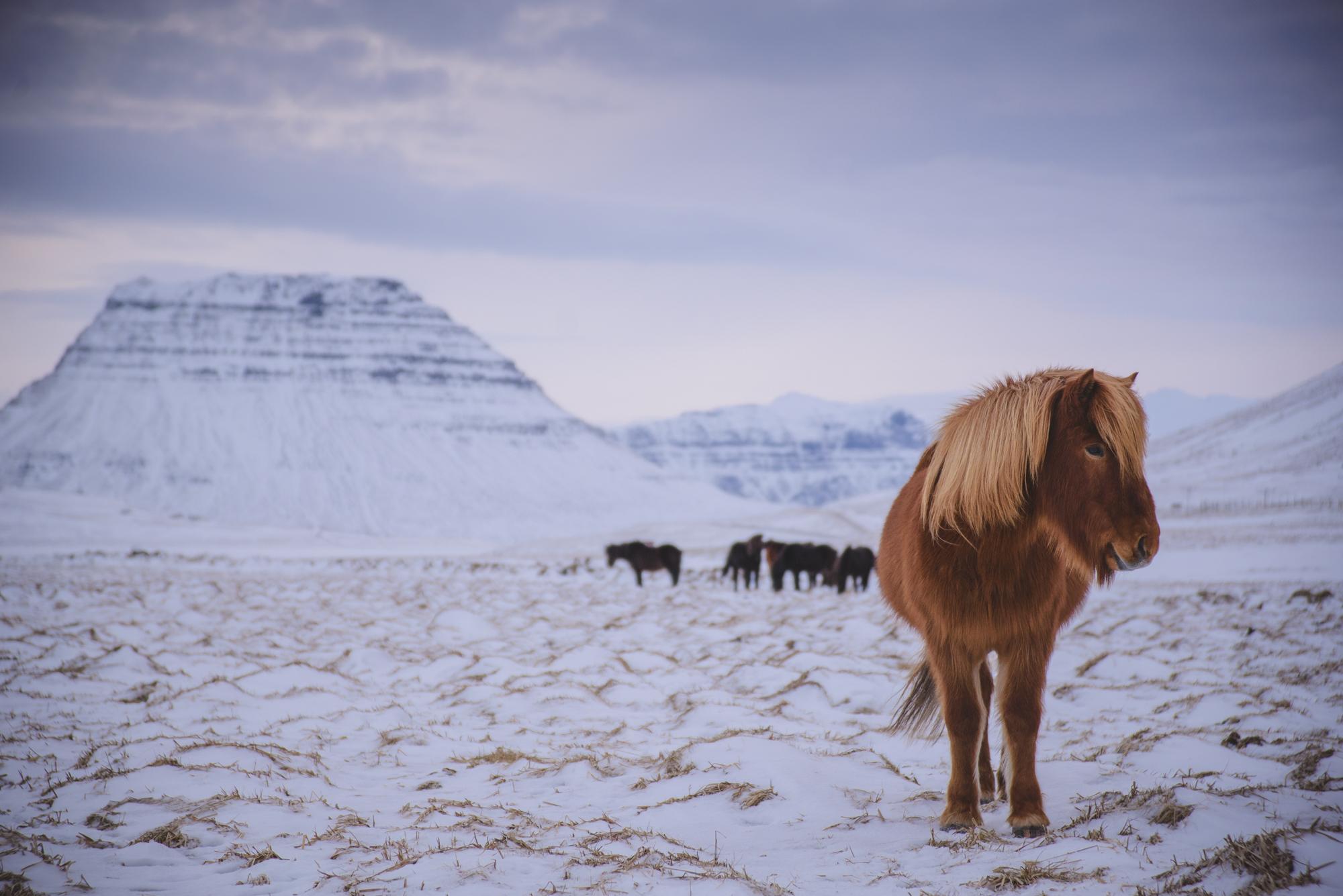 ICELAND LOW RES-45.jpg