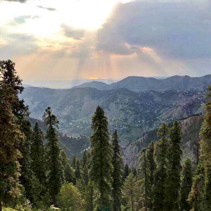 View over Nathiagali pine forest.
