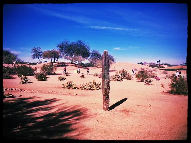 Desert reminder
