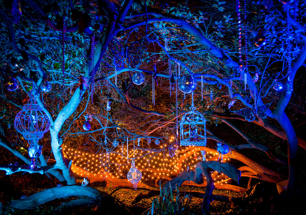 Syon Park's Enchanted Woodland, London