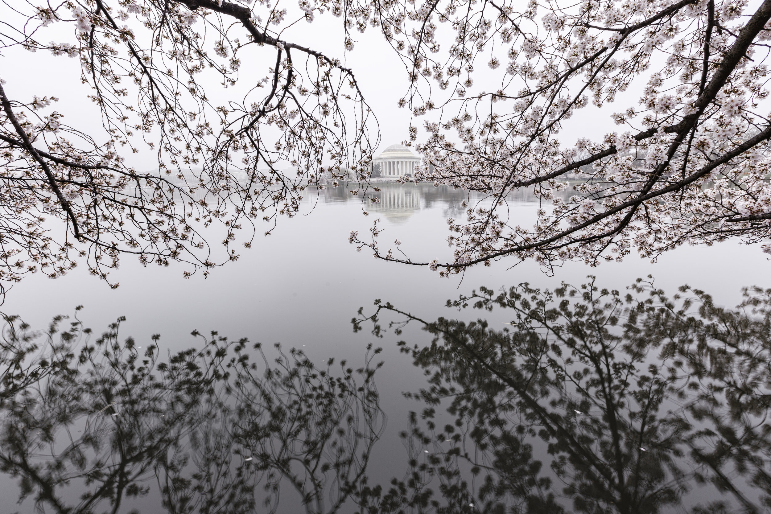 A Foggy Jefferson Memorial