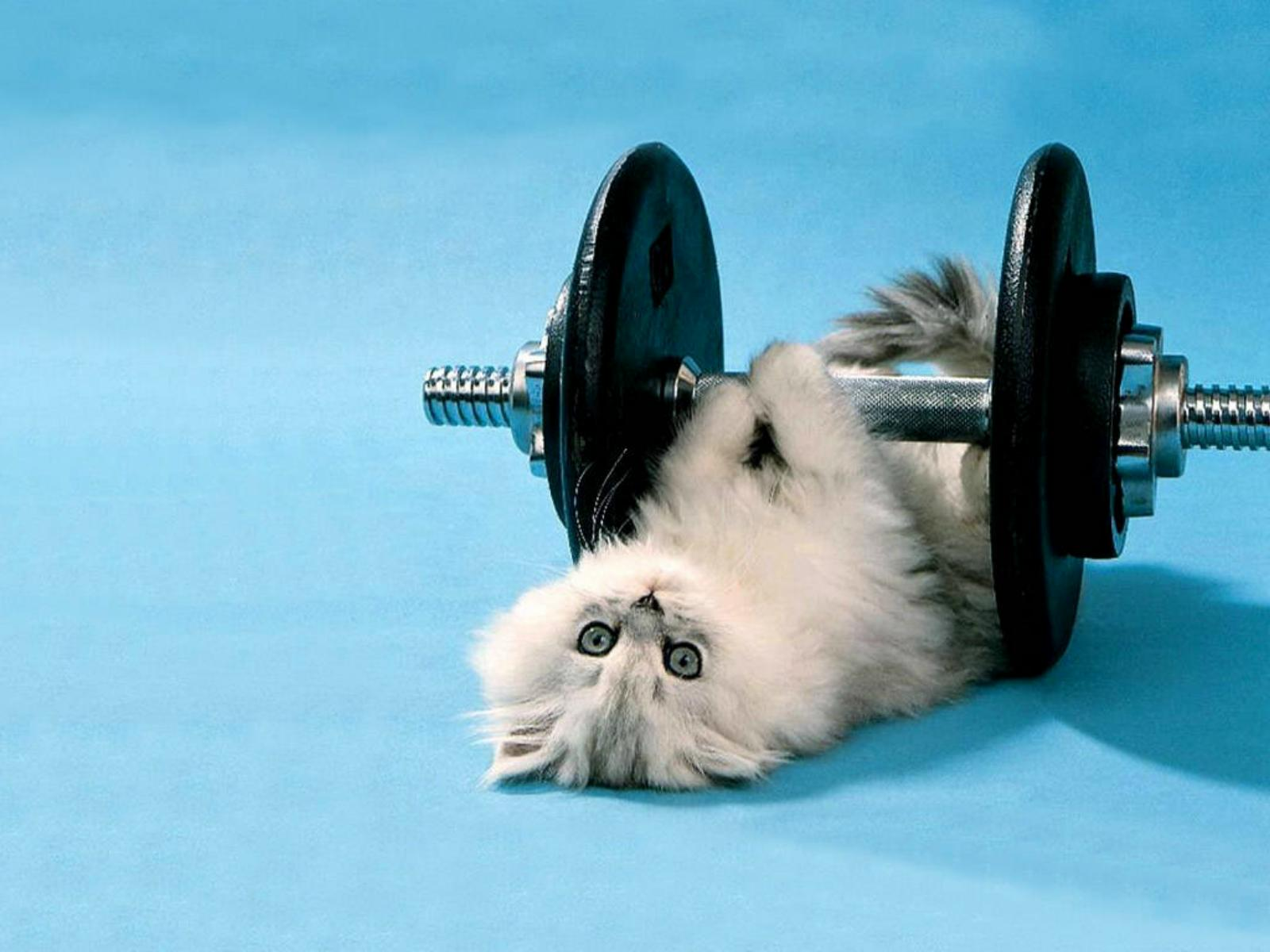 Funny-Kitten-Lifting-Weights.jpg