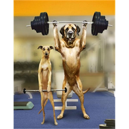 dog lifting weights with spotter.jpg