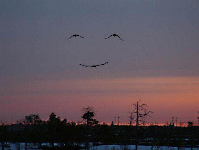 birds with happy face