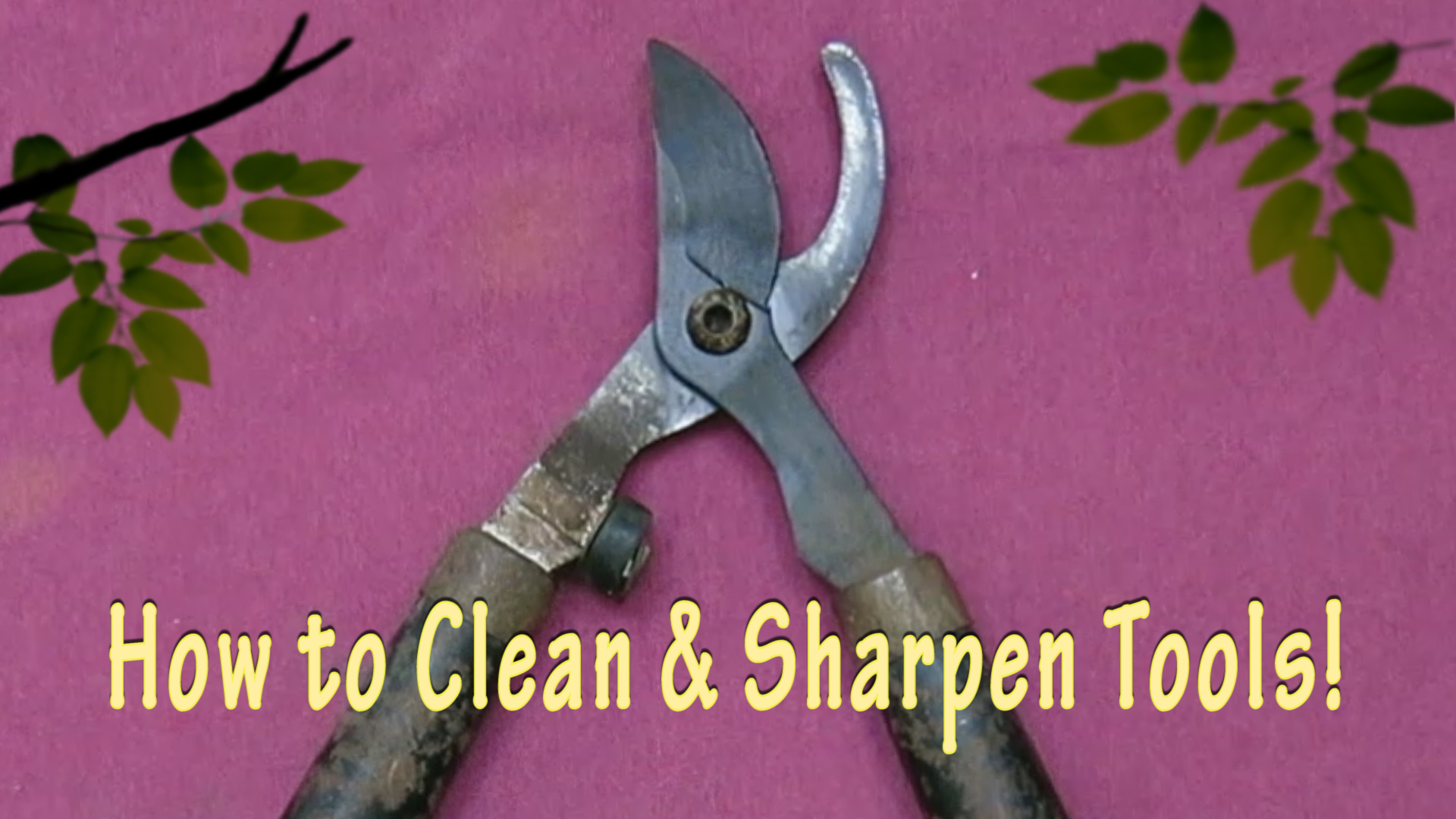 How to Clean and Sharpen Loppers and Pruning Sheers Title.jpg