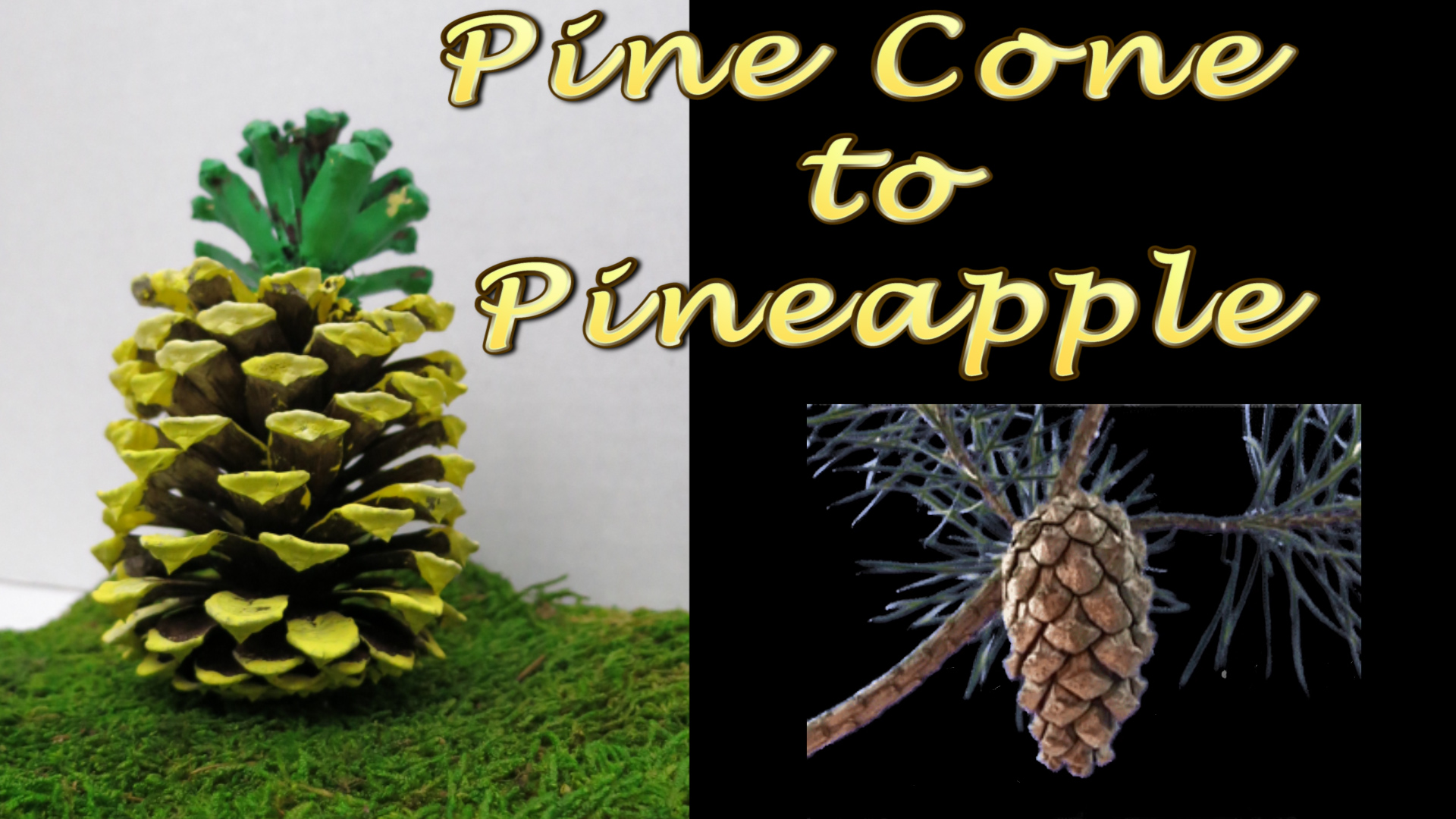 Pine Cone to a Pineapple Fast and Easy Craft.jpg
