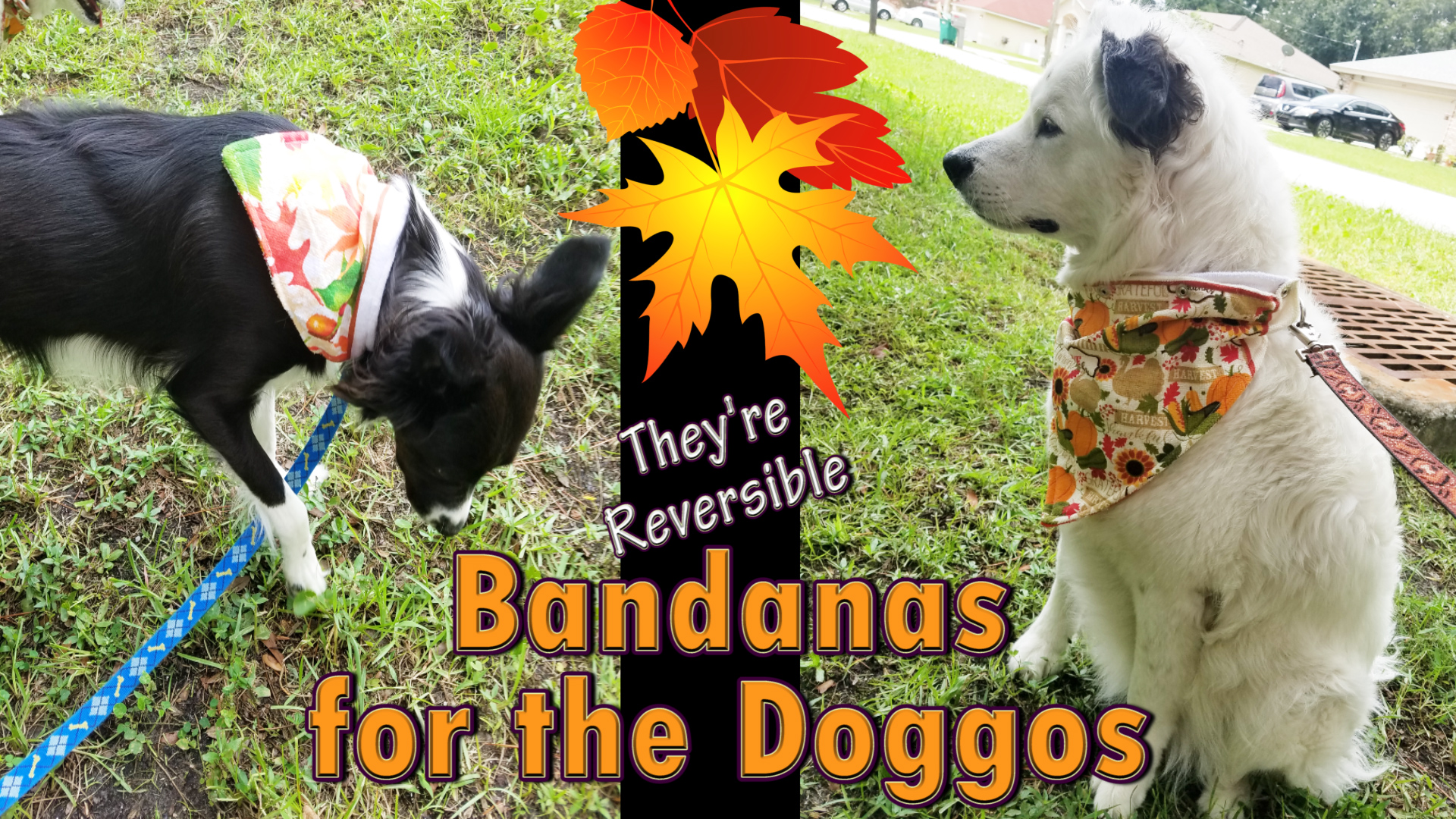Autumn Fall Pet Bandanas made out of towels.jpg