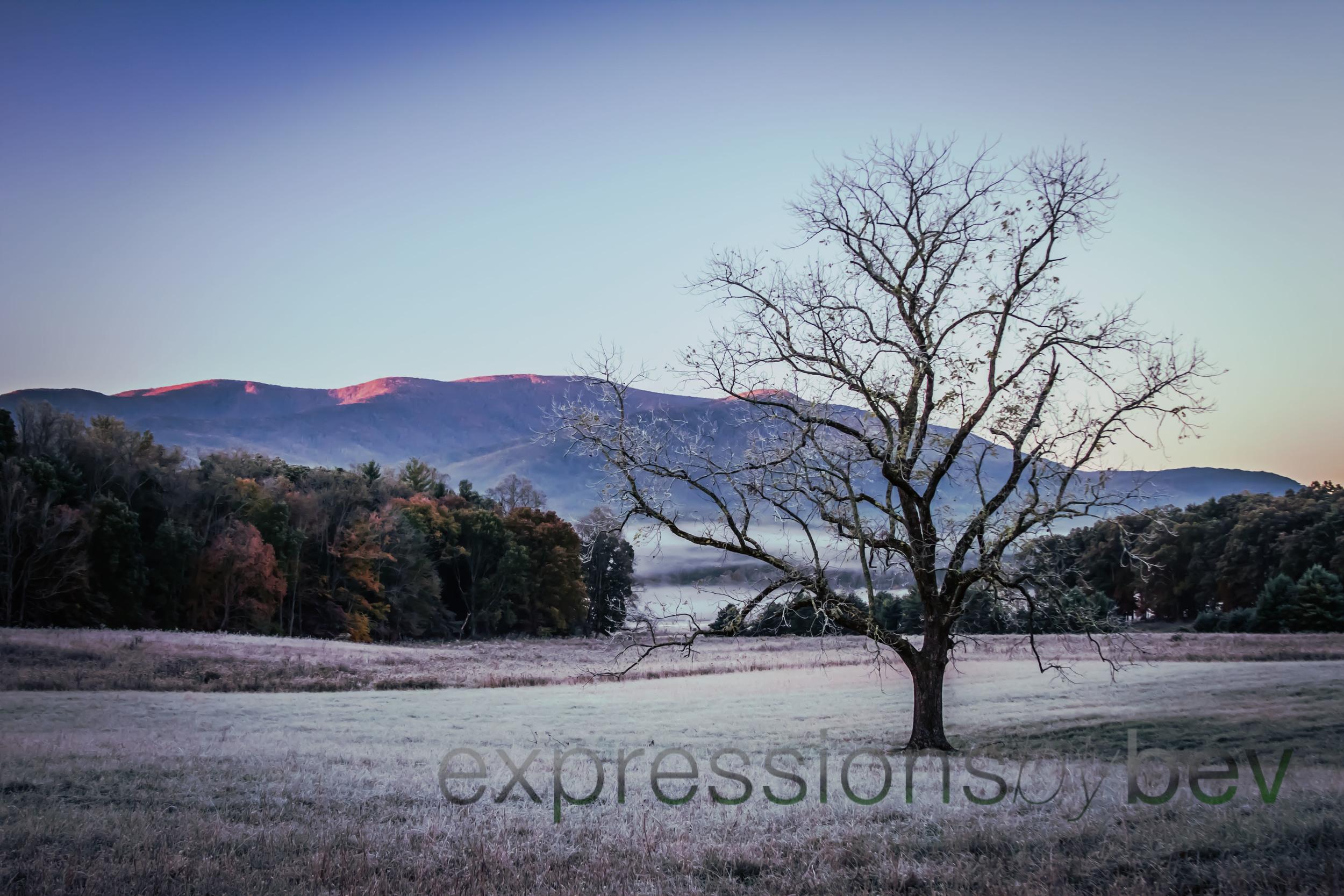 EBBev-2013-CNPA cades cove,treemont,roaring fork,sunrise,frost,spiderwebs,-3380-2_-41.jpg