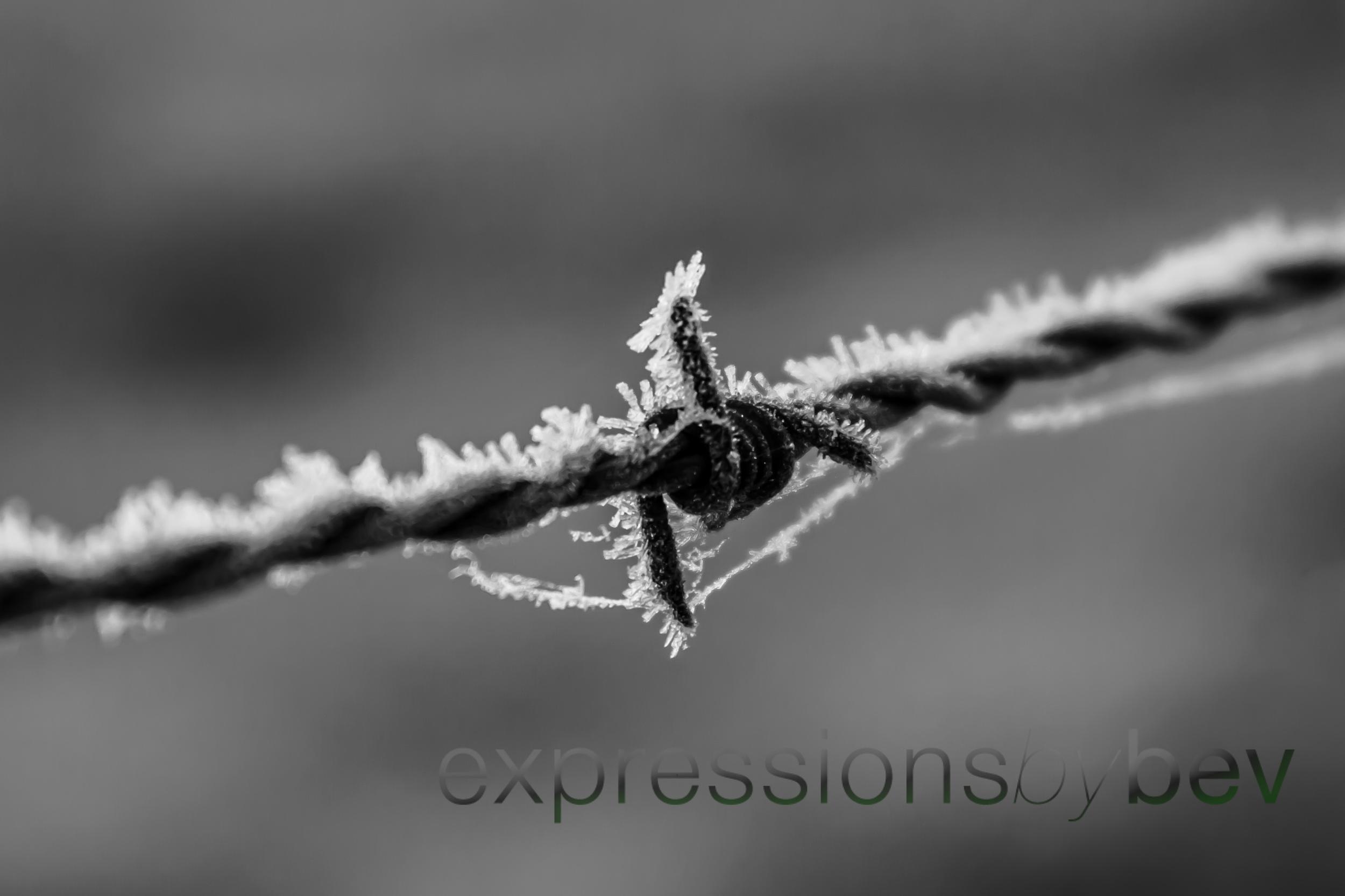 EBBev-2013-CNPA cades cove,treemont,roaring fork,sunrise,frost,spiderwebs,-3488-10_-56.jpg