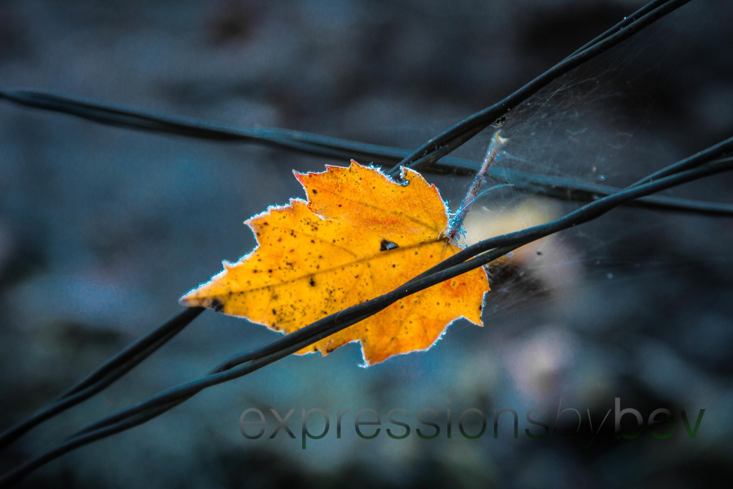 EBBev-2013-CNPA cades cove,treemont,roaring fork,sunrise,frost,spiderwebs,-3530-16_-58.jpg