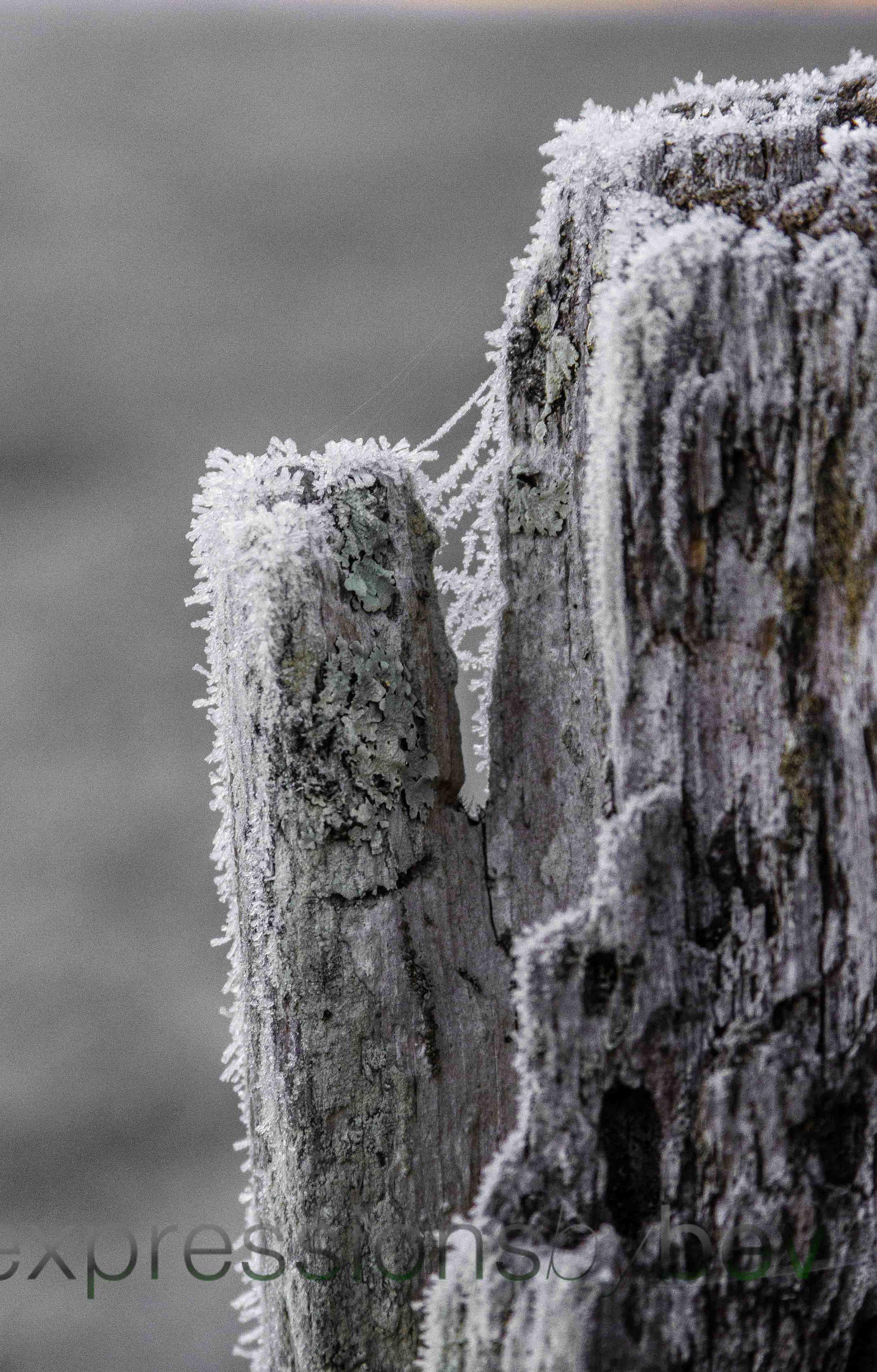 EBBev-2013-CNPA cades cove,treemont,roaring fork,sunrise,frost,spiderwebs,-3509-15_-57.jpg