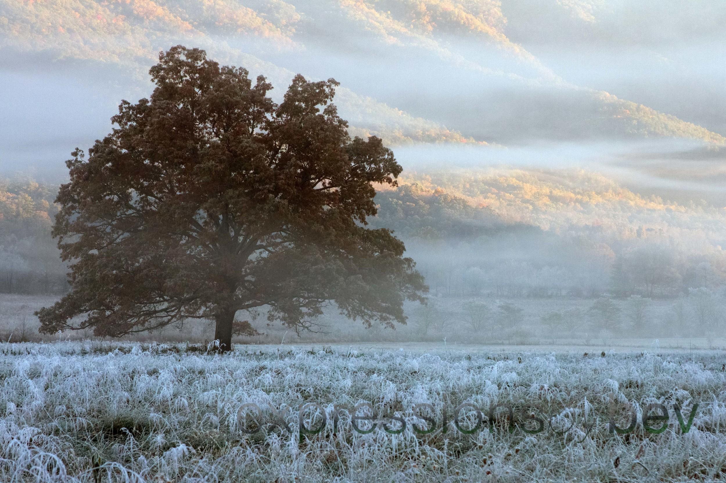EBBev-2013-CNPA cades cove,treemont,roaring fork,sunrise,frost,spiderwebs,-3414-55a_-7.jpg