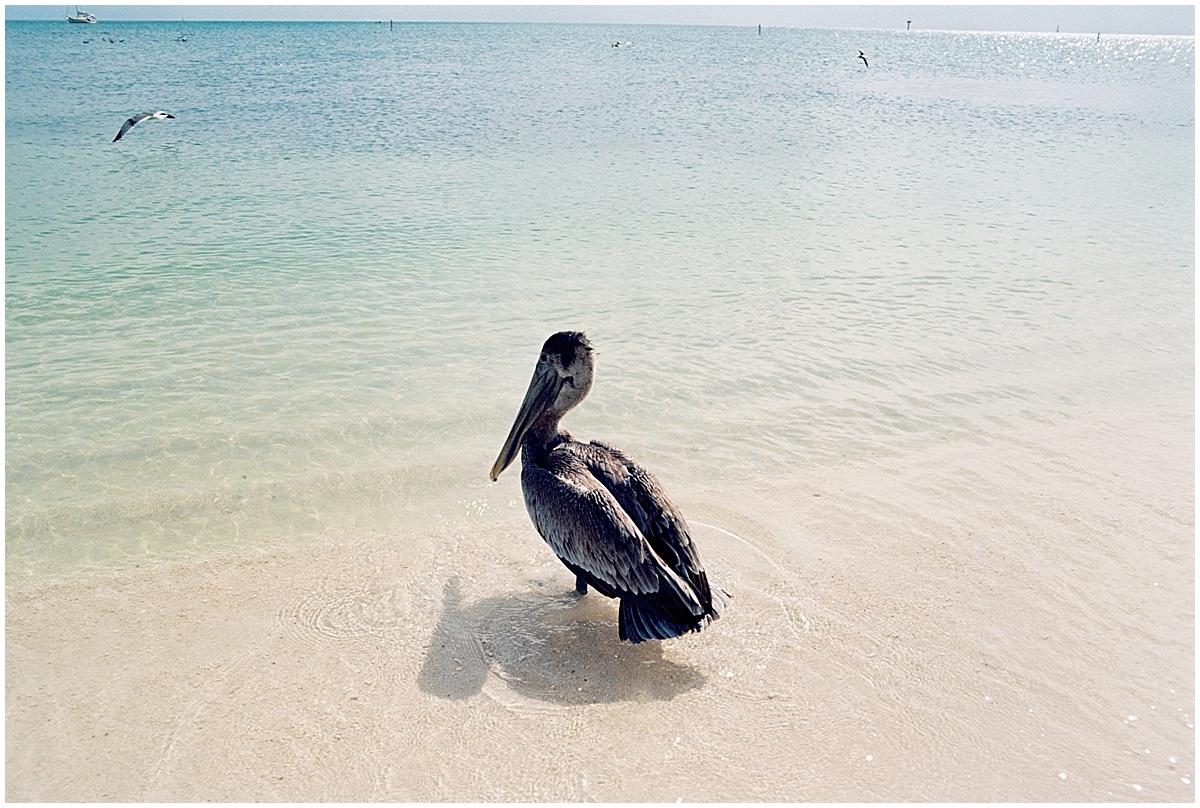 Abigail_Malone_Florida_keys_Travel_Photography_Film_Ektar_0048.jpg