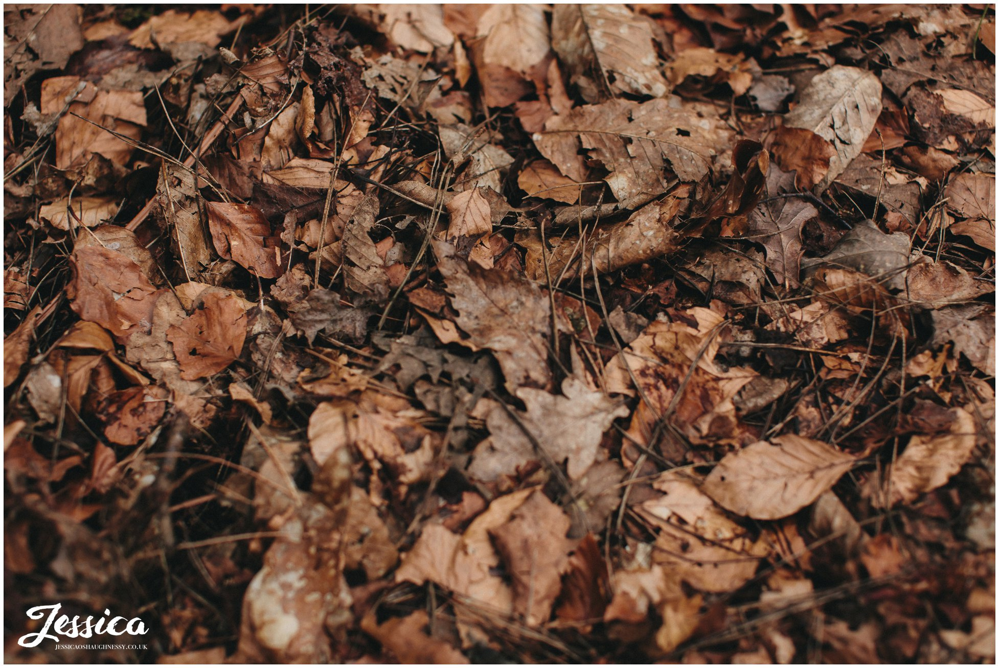 close up of autumn leaves in delamere forest