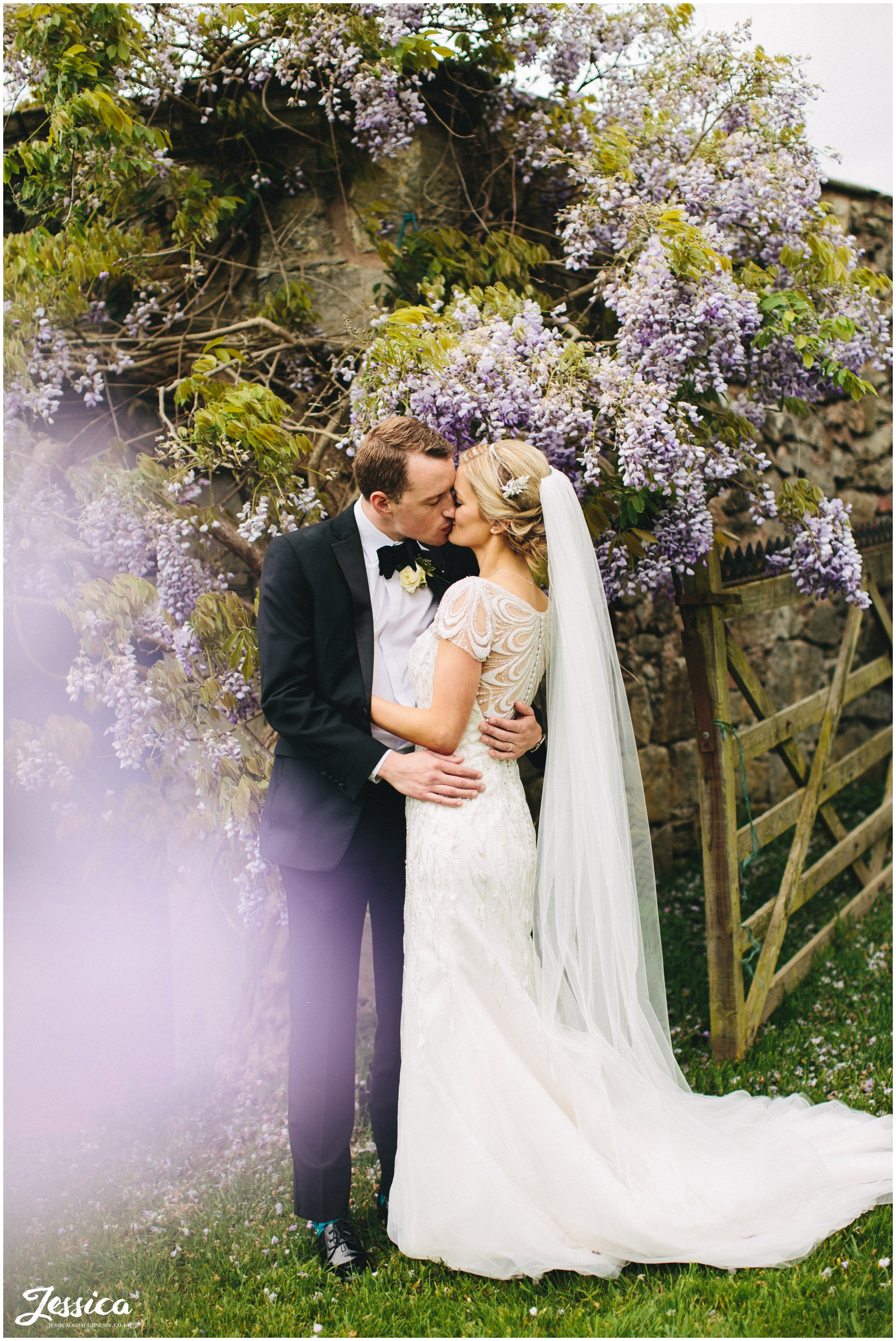 newly wed's surrounded by whisteria on their wedding day at Trevor Hall