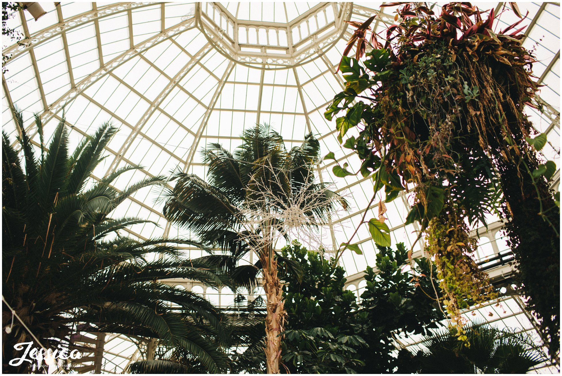 trees decorate sefton palm house in liverpool