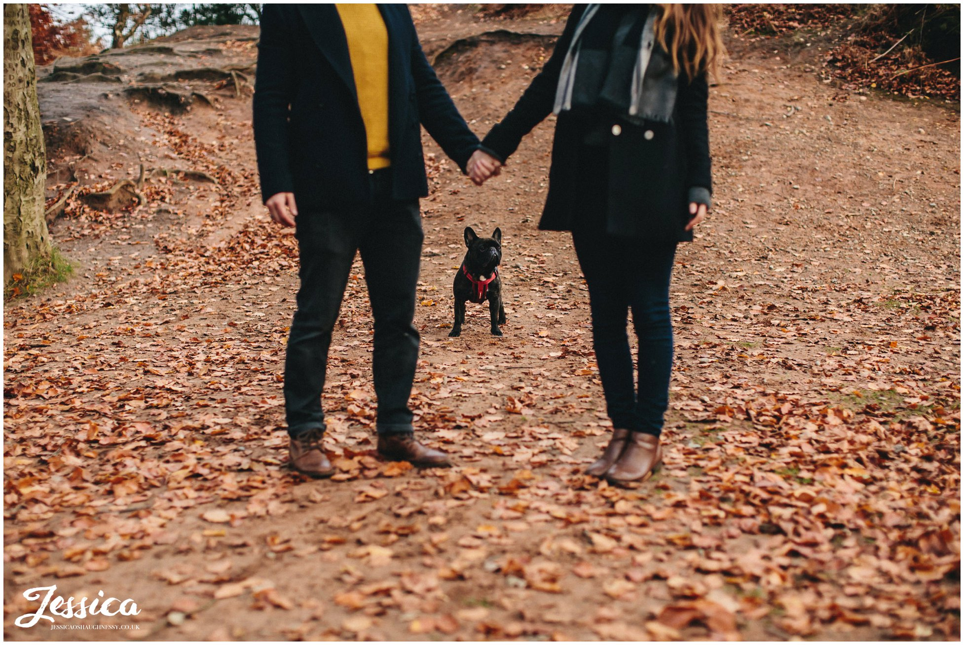 french bulldog between couple holding hands