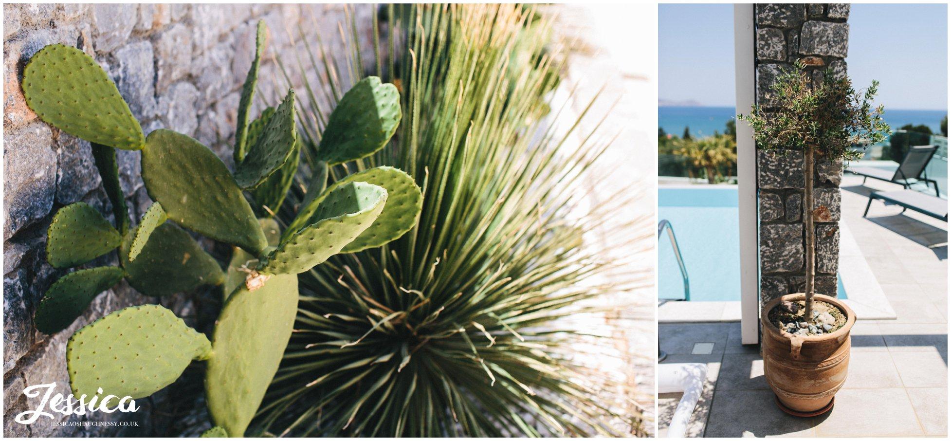 cactus growing outside the bridal prep villa