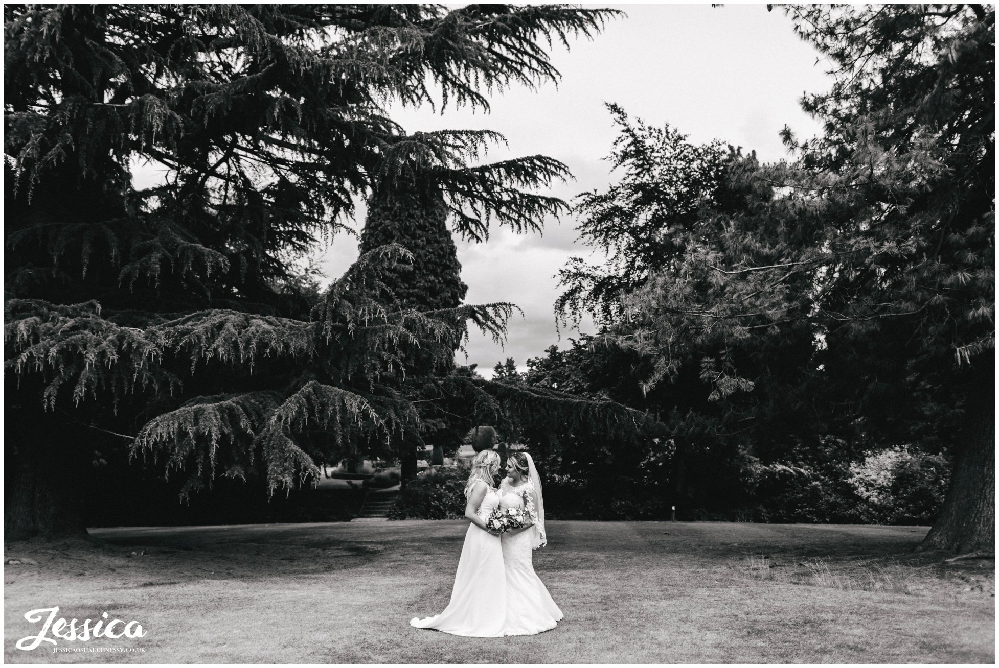 wife & wife kiss in the distance under the huge tree's