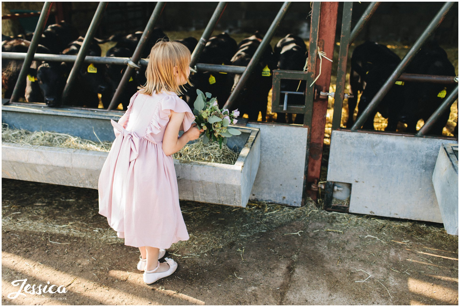 flower girls looks at the cows