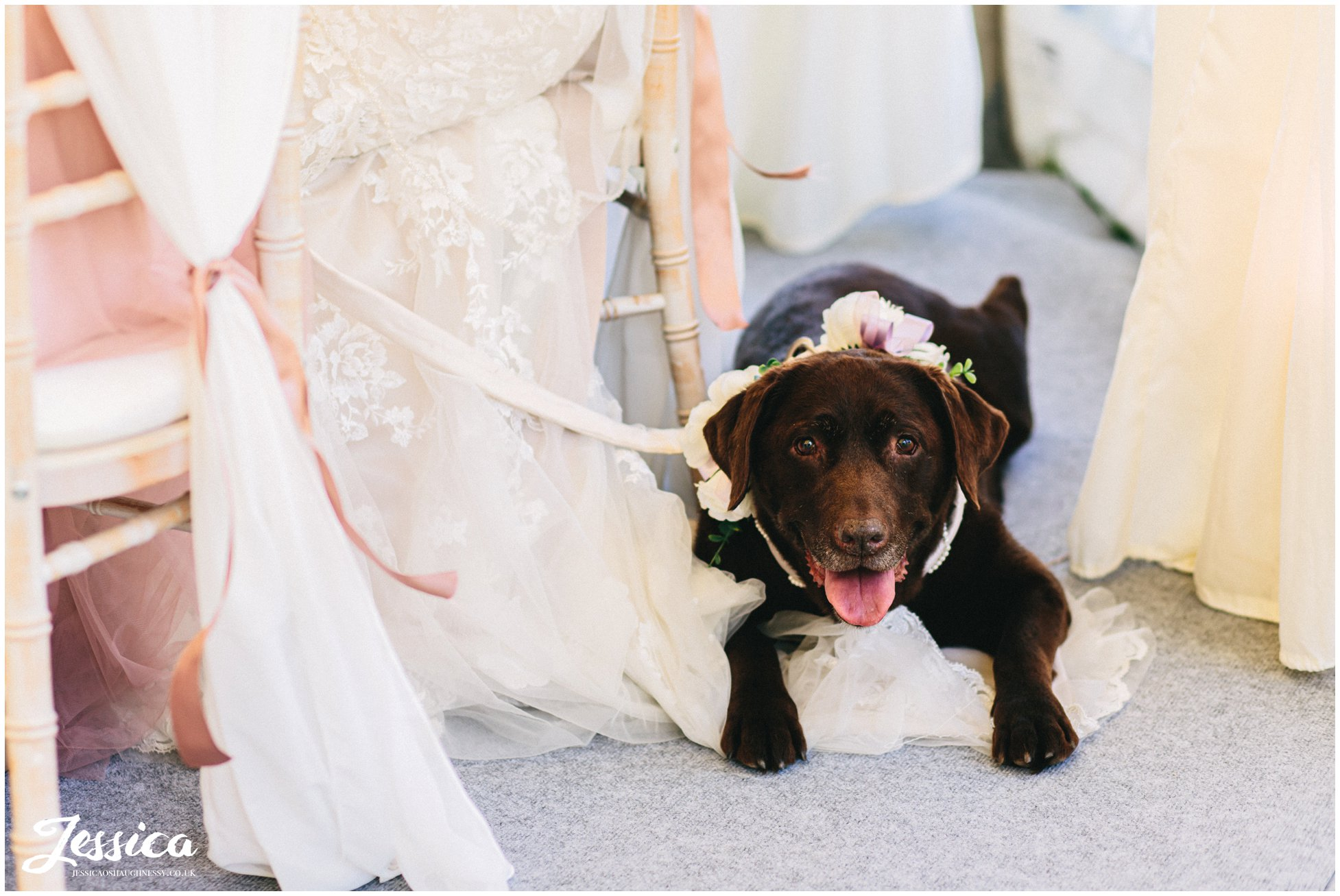 dog lies down at the brides feet during the speeches