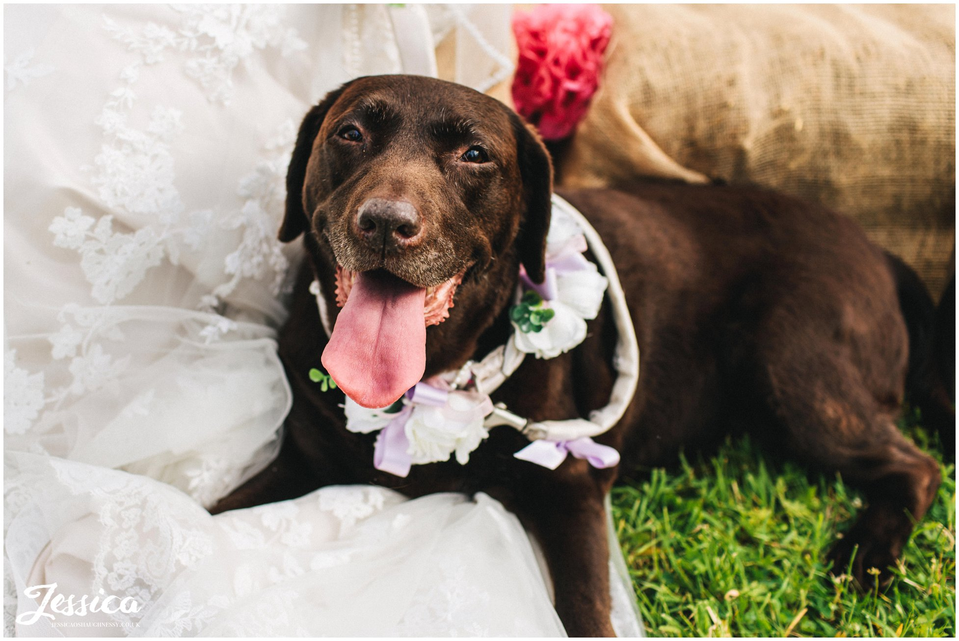 brides dog lies on her dress in the sun