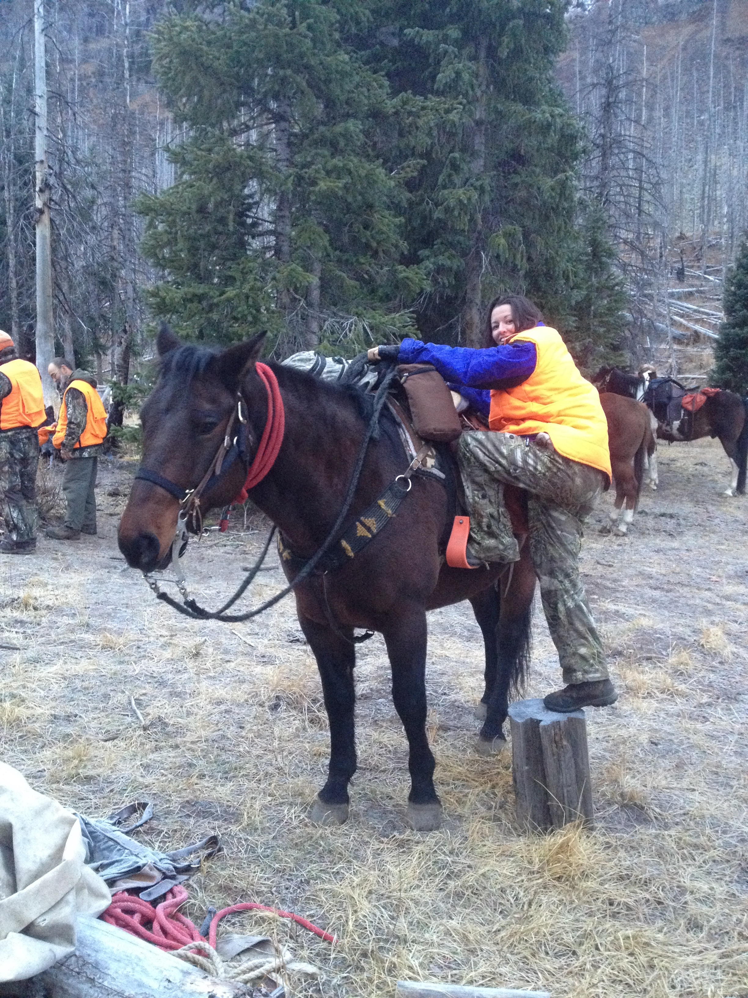 This is Woody. He is a very tall horse that required me finding a stump, rock, helping hand, whatever I could to crawl on his back. He was my mode of transportation for 3 of the 7 days hunting and camping. He delivered me across many miles and crazy switchbacks I just pretended didn't exist. I requested a Shetland pony for next year.     #woody  #wildernesscamping   #elkhunting  #kaylinngilstrapphoto   #thewest   #horse