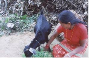 bbp_microcredit_2008.jpg