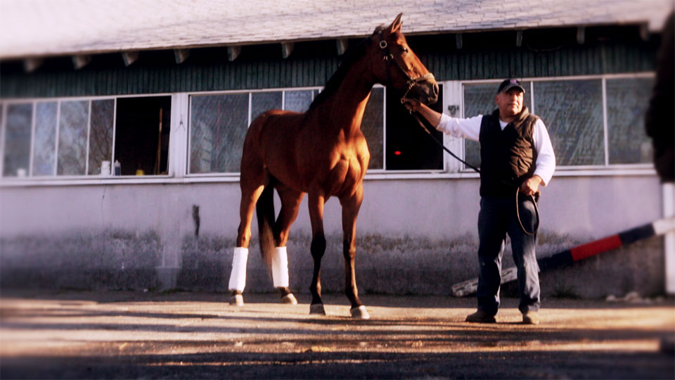 A monster of a horse, Holiday's Jewel
