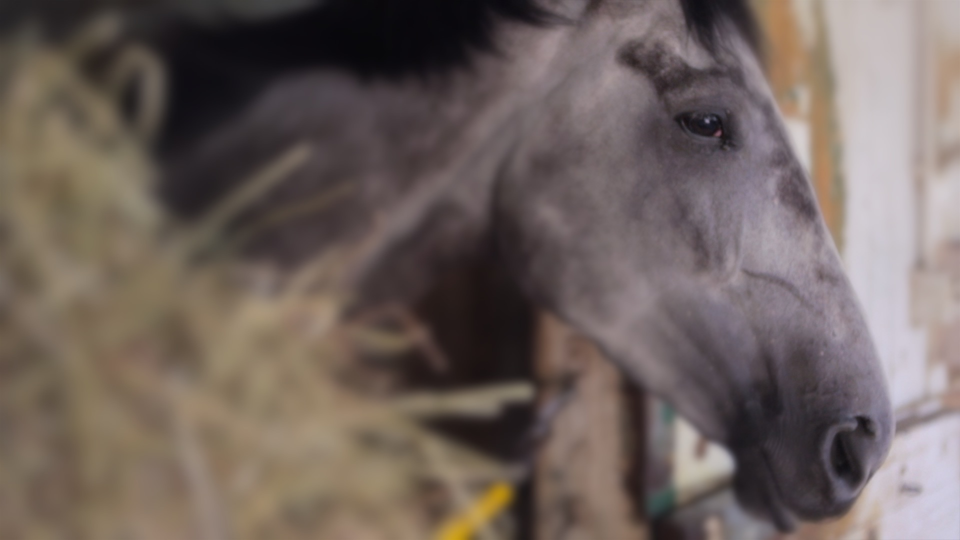 Centrina, one of the oldest horses at Barn 47 and quite a beauty.